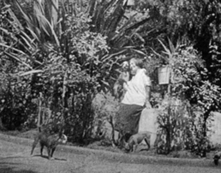 Detail of a photo taken in front of the Conservatory about 1914-1916. Probably of Temperance Merralls, accompanied by her dogs -- note two pit-bull terrier pups at her feet.